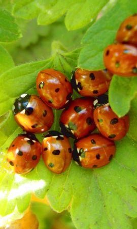 30690 Salvapantallas y fondos de pantalla Insectos en tu teléfono. Descarga imágenes de Insectos, Mariquitas gratis
