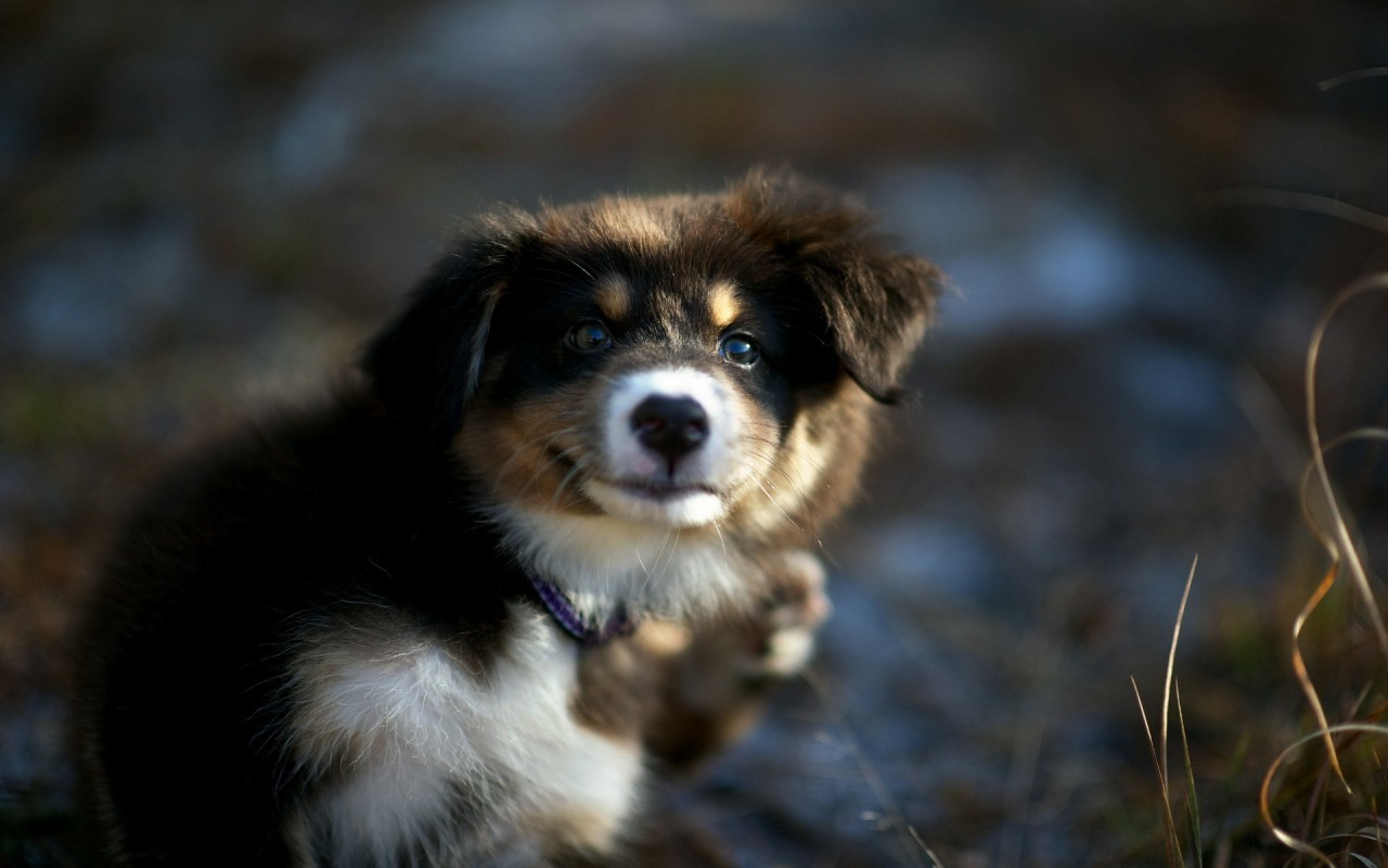 18567 download wallpaper Animals, Dogs screensavers and pictures for free
