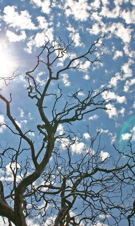 1102 скачать обои Пейзаж, Деревья, Небо, Солнце - заставки и картинки бесплатно