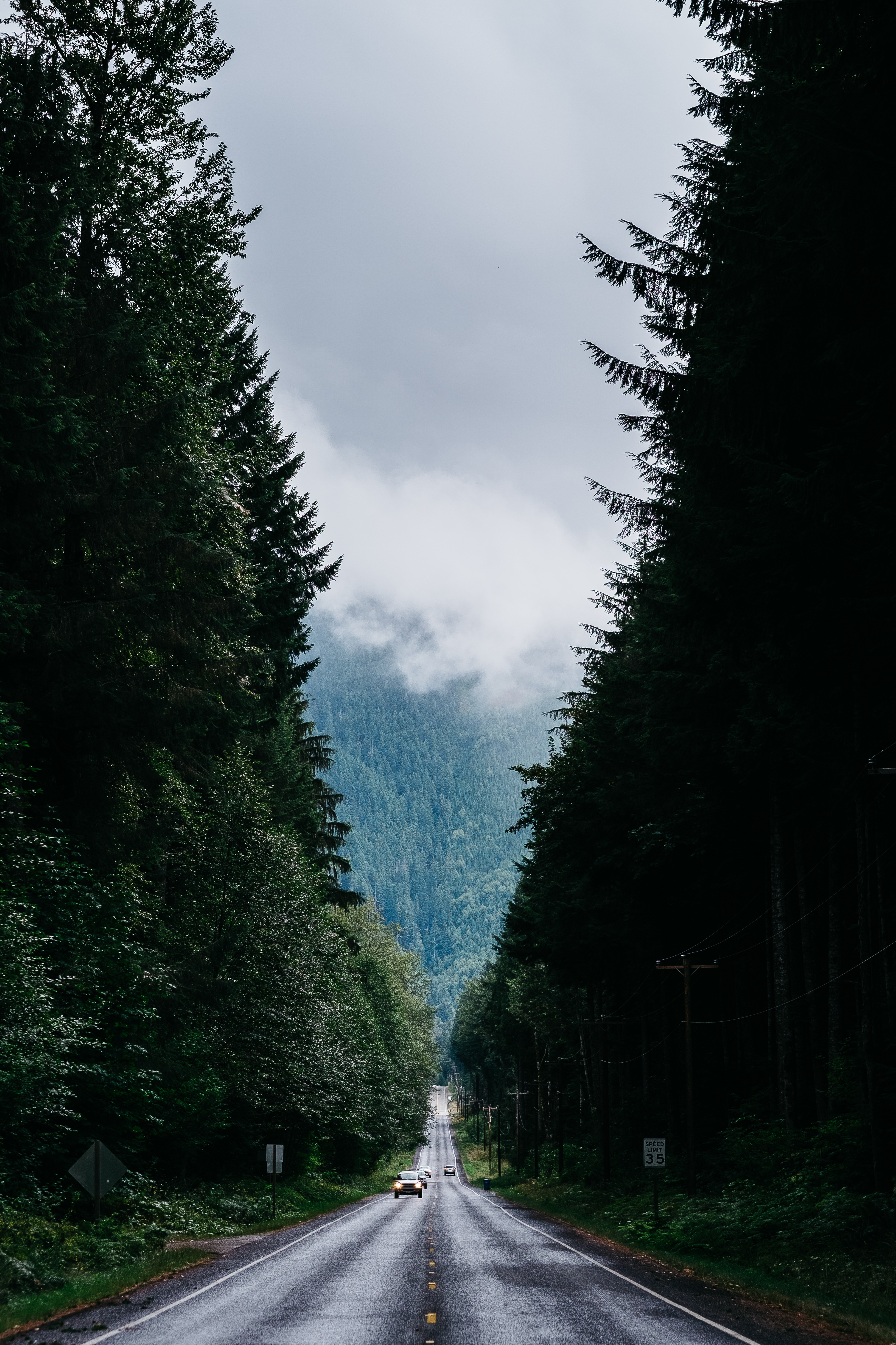 93287 Screensavers and Wallpapers Road for phone. Download Nature, Trees, Road, Markup, Forest, Fog, Traffic, Movement pictures for free