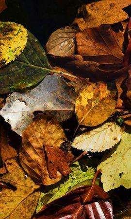 653 скачать обои Растения, Фон, Осень, Листья - заставки и картинки бесплатно