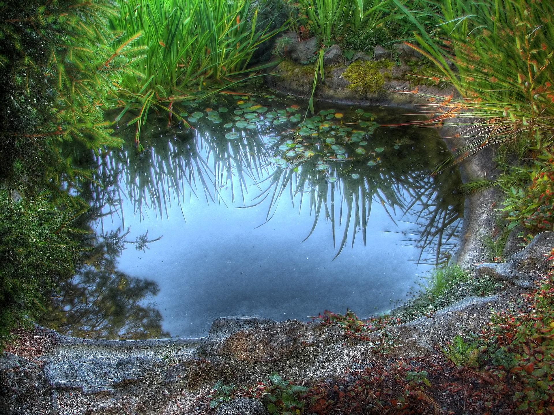 128663 télécharger le fond d'écran Nature, Flaque, Herbe, Lac, Lilies, Noyaux, Réflexion - économiseurs d'écran et images gratuitement
