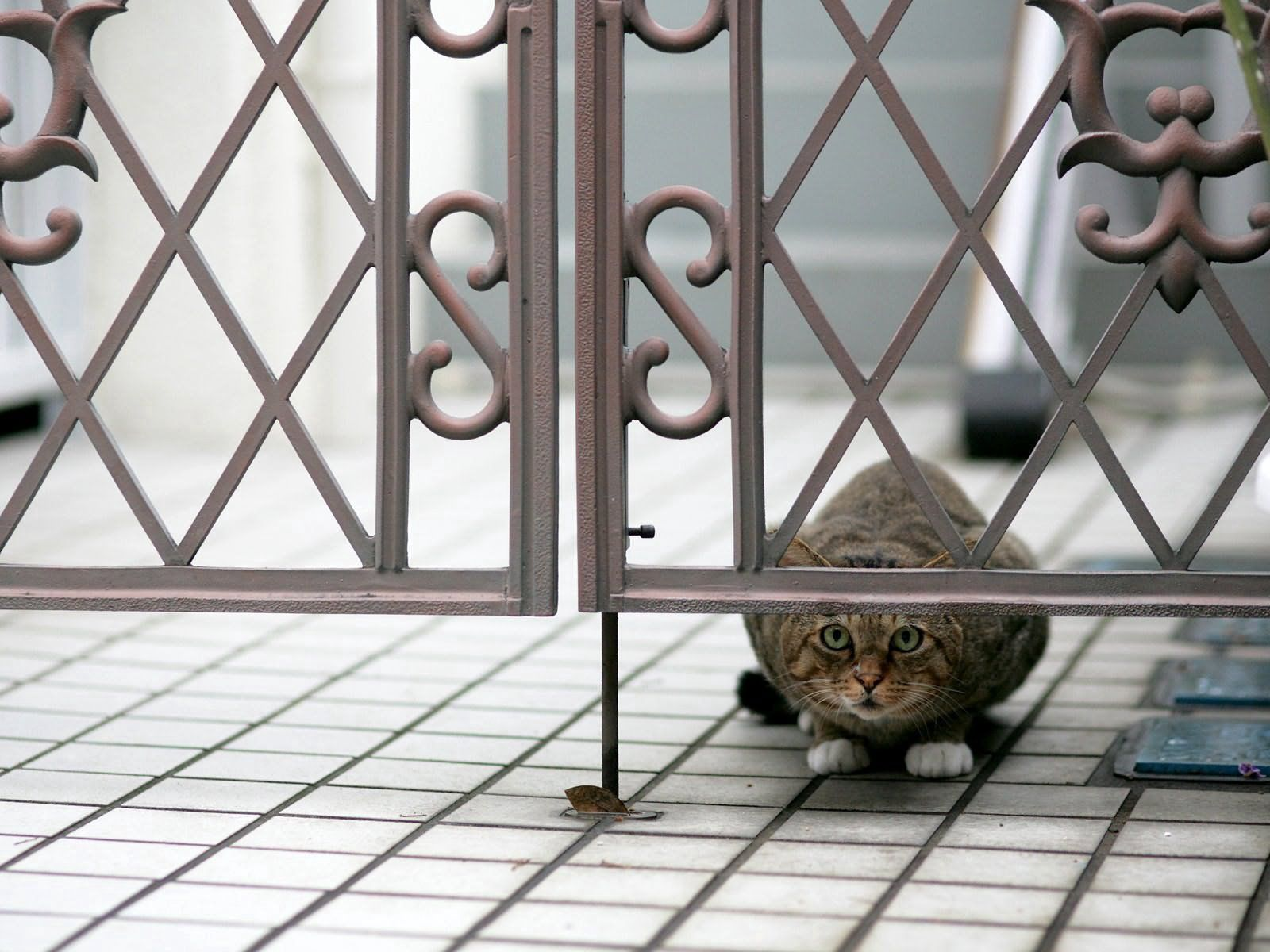 102761 download wallpaper Animals, Cat, Peek Out, Look Out, Hide, Sit screensavers and pictures for free
