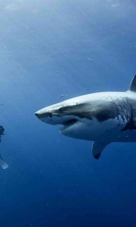 43003 baixar papel de parede Animais, Sharks - protetores de tela e imagens gratuitamente