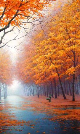 21749 скачать обои Пейзаж, Деревья, Осень, Улицы - заставки и картинки бесплатно