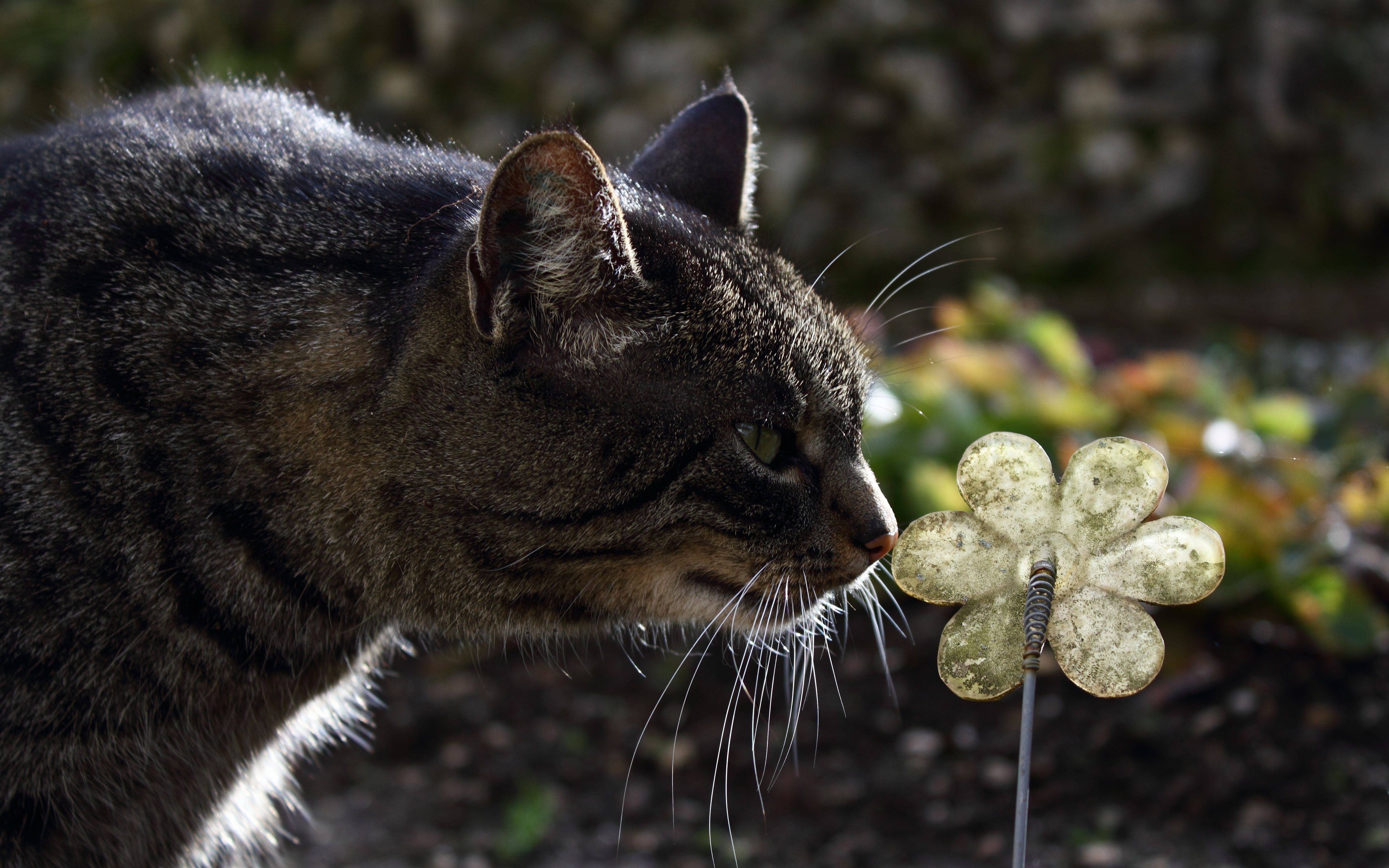 108658 download wallpaper Animals, Cat, Muzzle, Striped, Flower screensavers and pictures for free