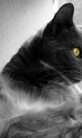7758 download wallpaper Animals, Cats screensavers and pictures for free