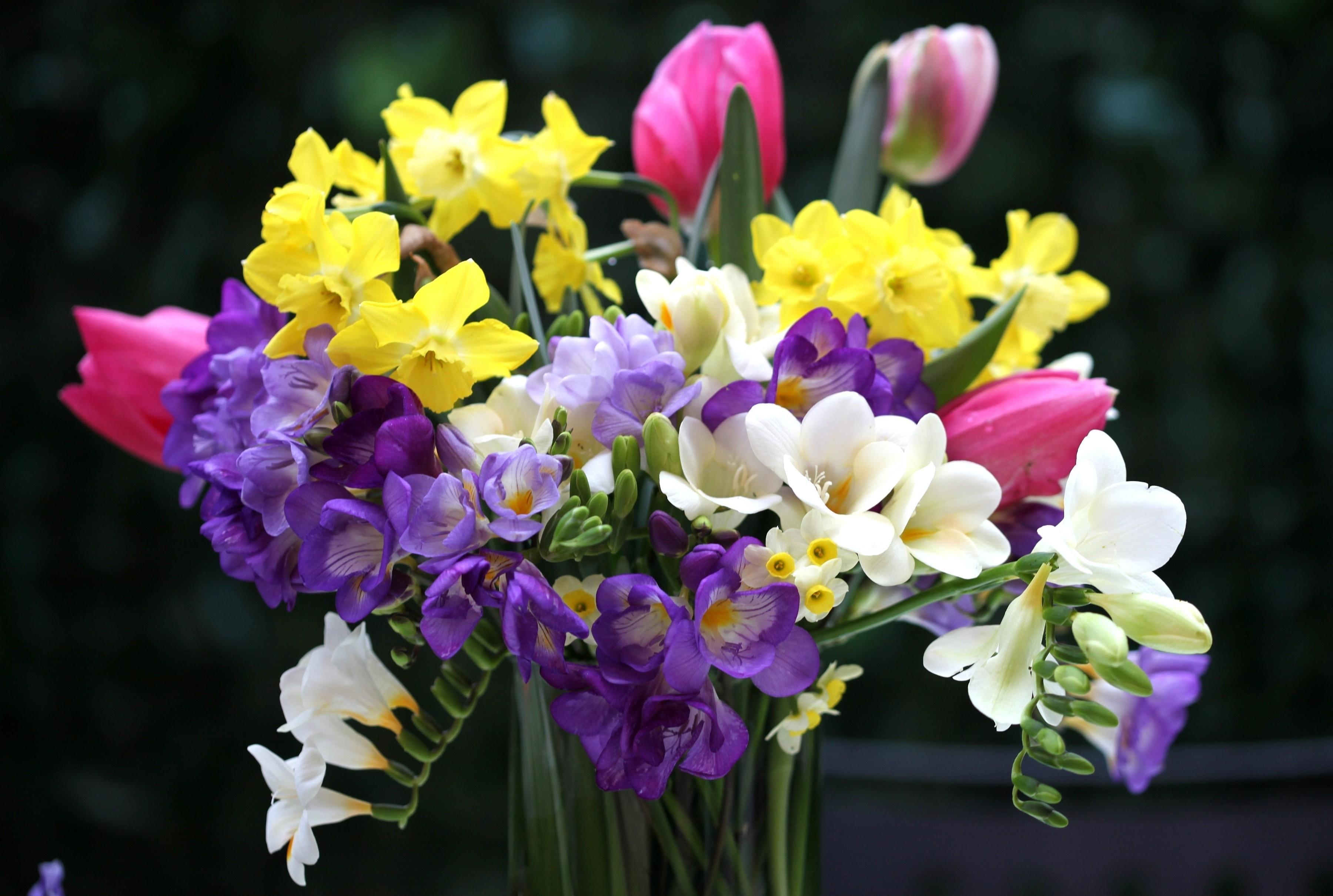 64605 Заставки и Обои Нарциссы на телефон. Скачать Тюльпаны, Цветы, Нарциссы, Букет, Ваза, Фрезия картинки бесплатно