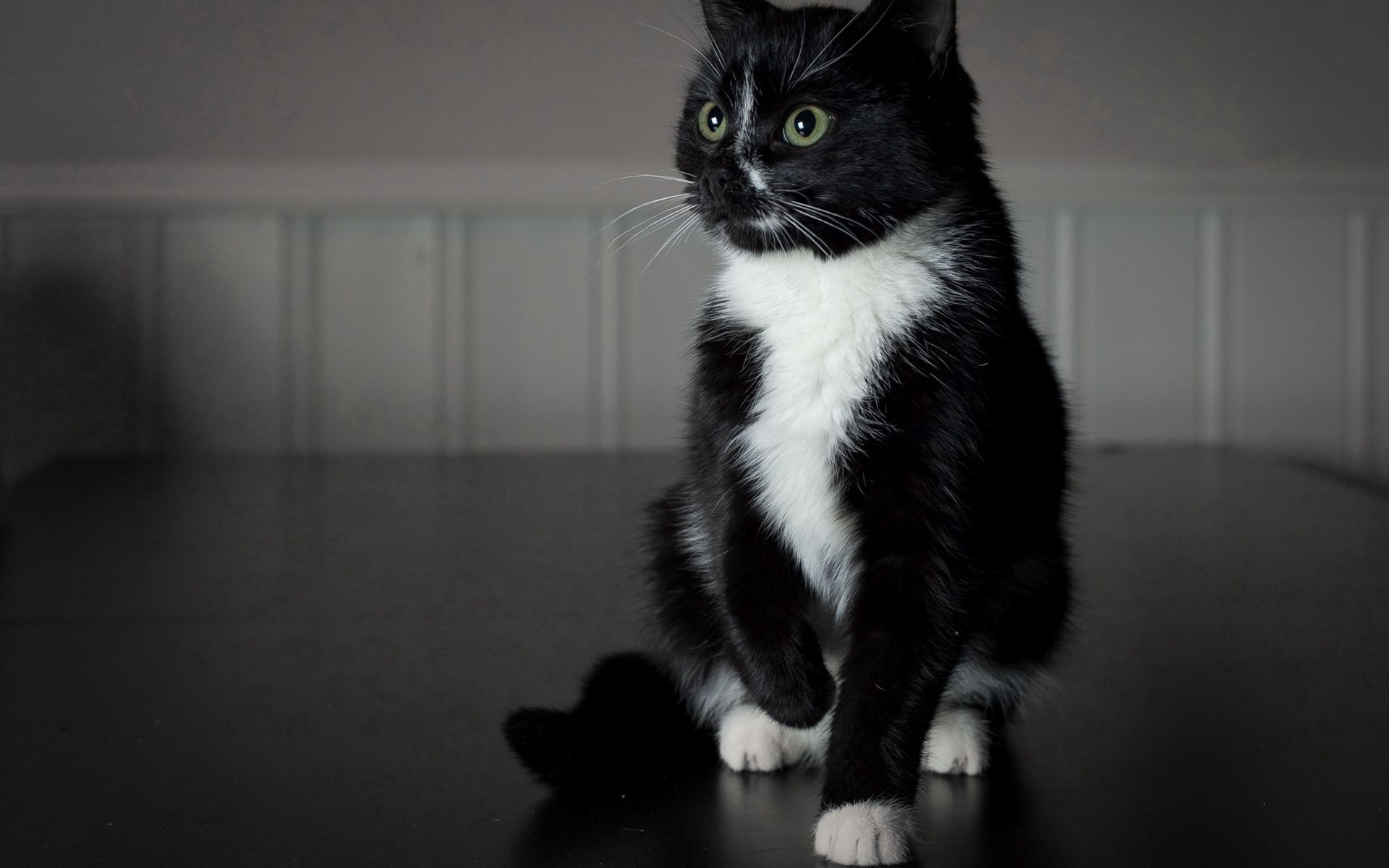 54238 download wallpaper Animals, Black Cat, White Paws, Kid, Tot screensavers and pictures for free