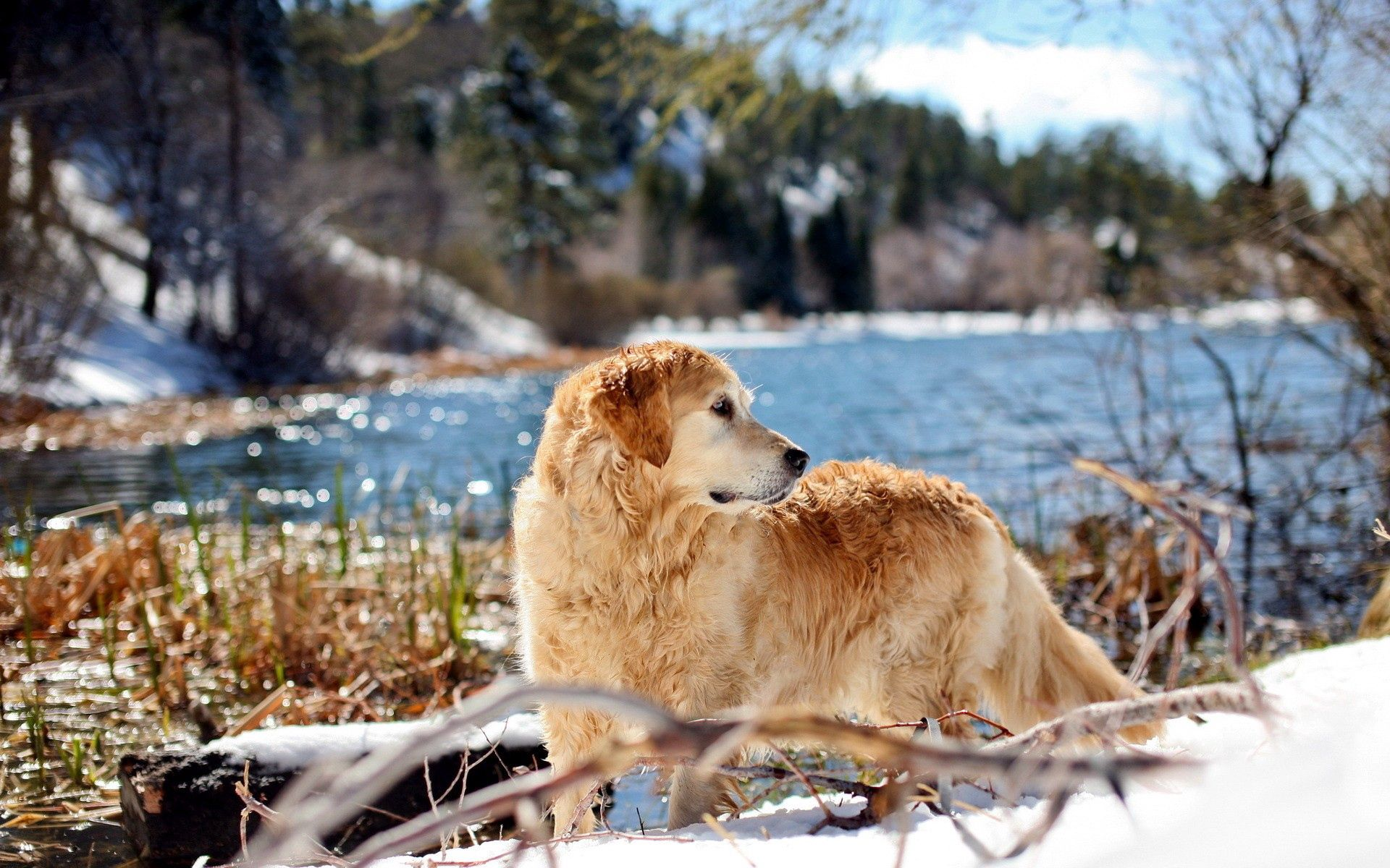 154688 download wallpaper Animals, Dog, Rivers, Stroll, Look Around, Look Back screensavers and pictures for free