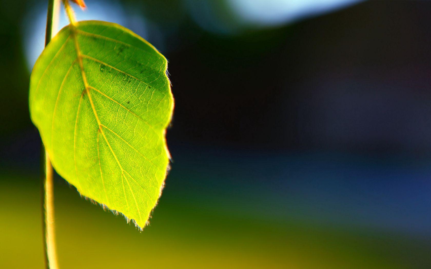 110741 скачать обои Макро, Лист, Растение, Форма, Свет, Фон - заставки и картинки бесплатно