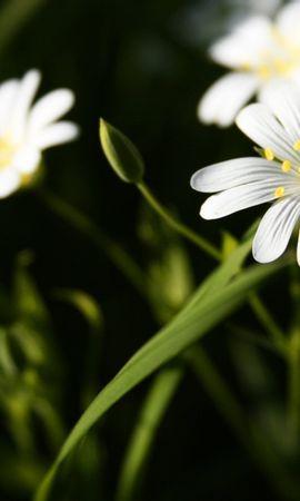25686 скачать обои Растения, Цветы - заставки и картинки бесплатно