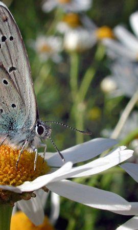 3919 télécharger le fond d'écran Papillons, Fleurs, Insectes - économiseurs d'écran et images gratuitement