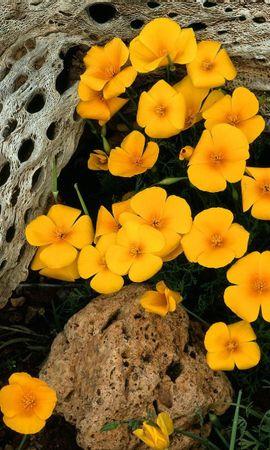 22591 descargar fondo de pantalla Plantas, Flores: protectores de pantalla e imágenes gratis