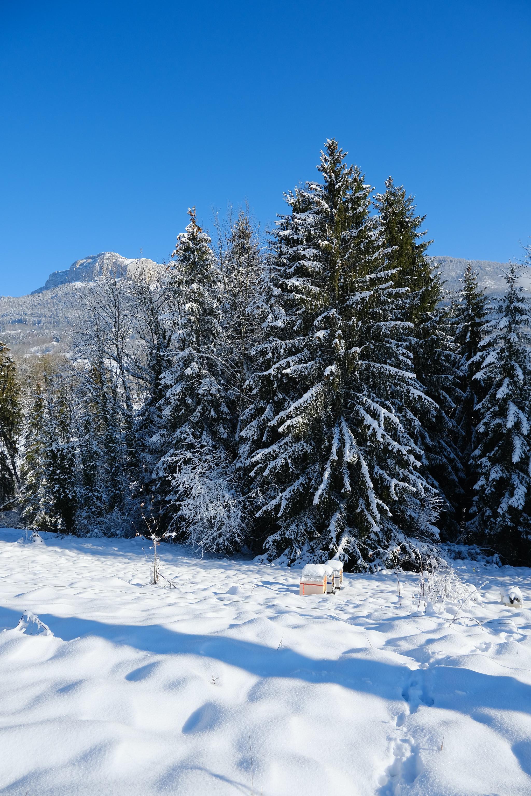 114049 скачать обои Природа, Деревья, Снег, Гора, Зима, Пейзаж, Елки - заставки и картинки бесплатно