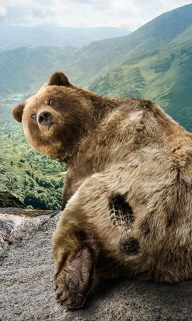 43415 baixar papel de parede Animais, Bears - protetores de tela e imagens gratuitamente