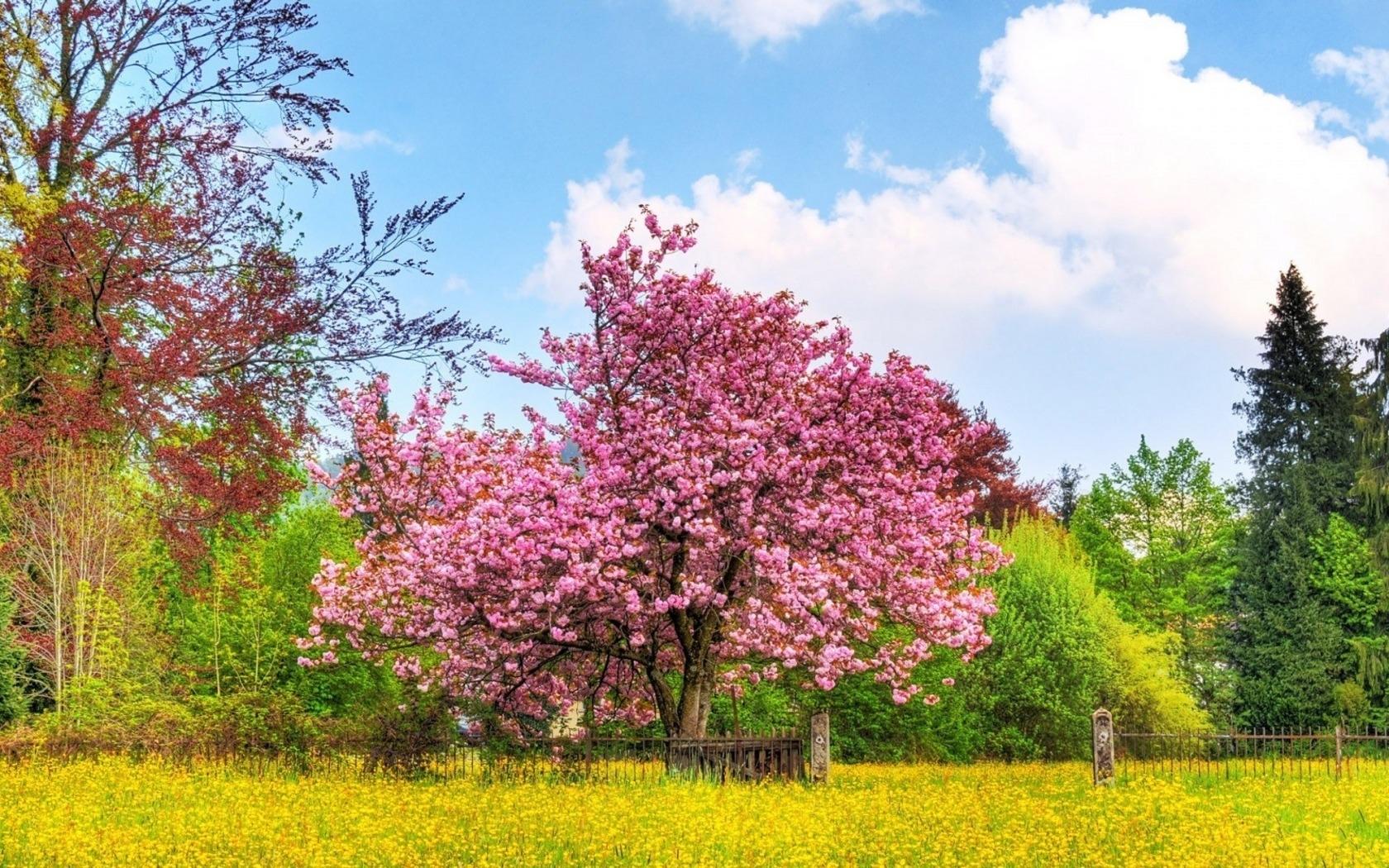 5476 скачать обои Пейзаж, Деревья - заставки и картинки бесплатно