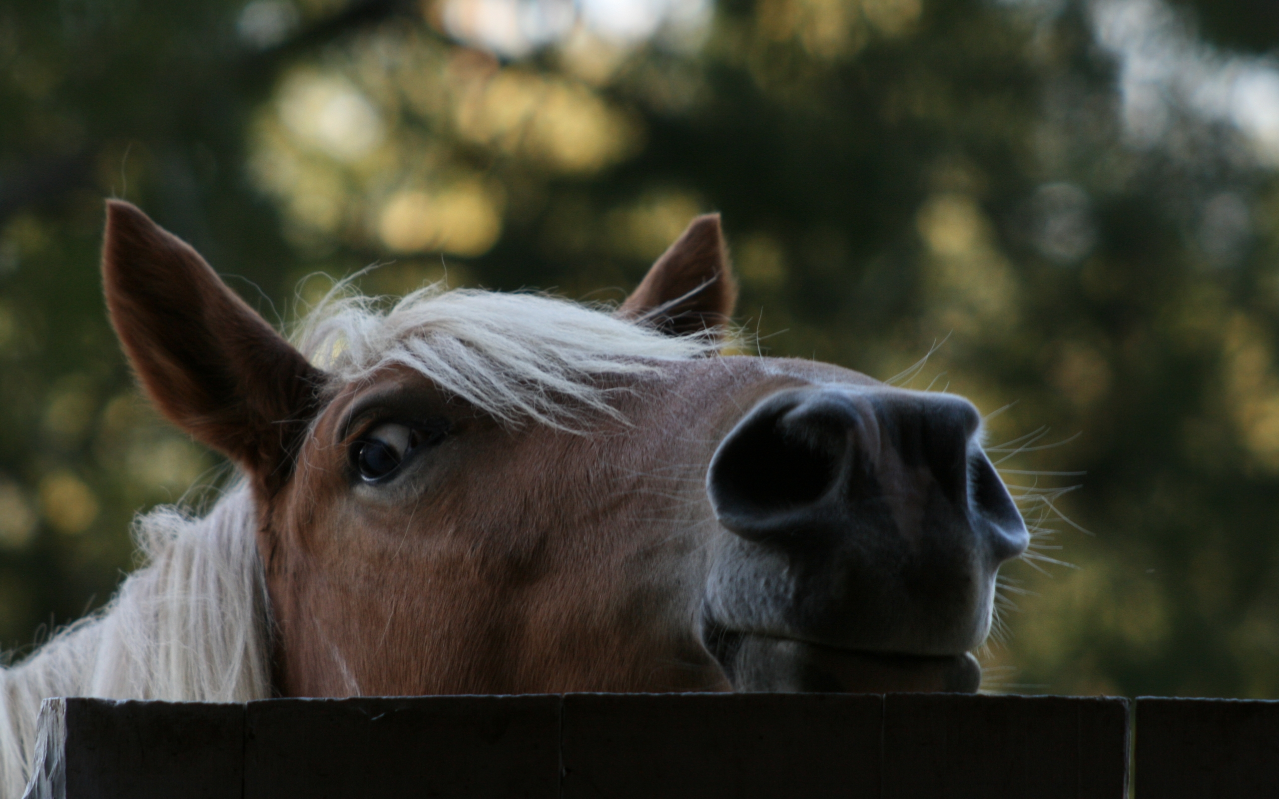 42341 download wallpaper Animals, Horses screensavers and pictures for free