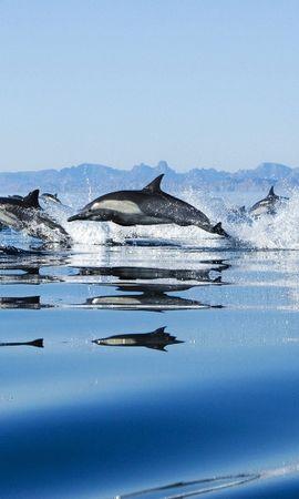 40906 baixar papel de parede Animais, Golfinhos - protetores de tela e imagens gratuitamente