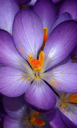 3047 descargar fondo de pantalla Plantas, Flores, Fondo: protectores de pantalla e imágenes gratis