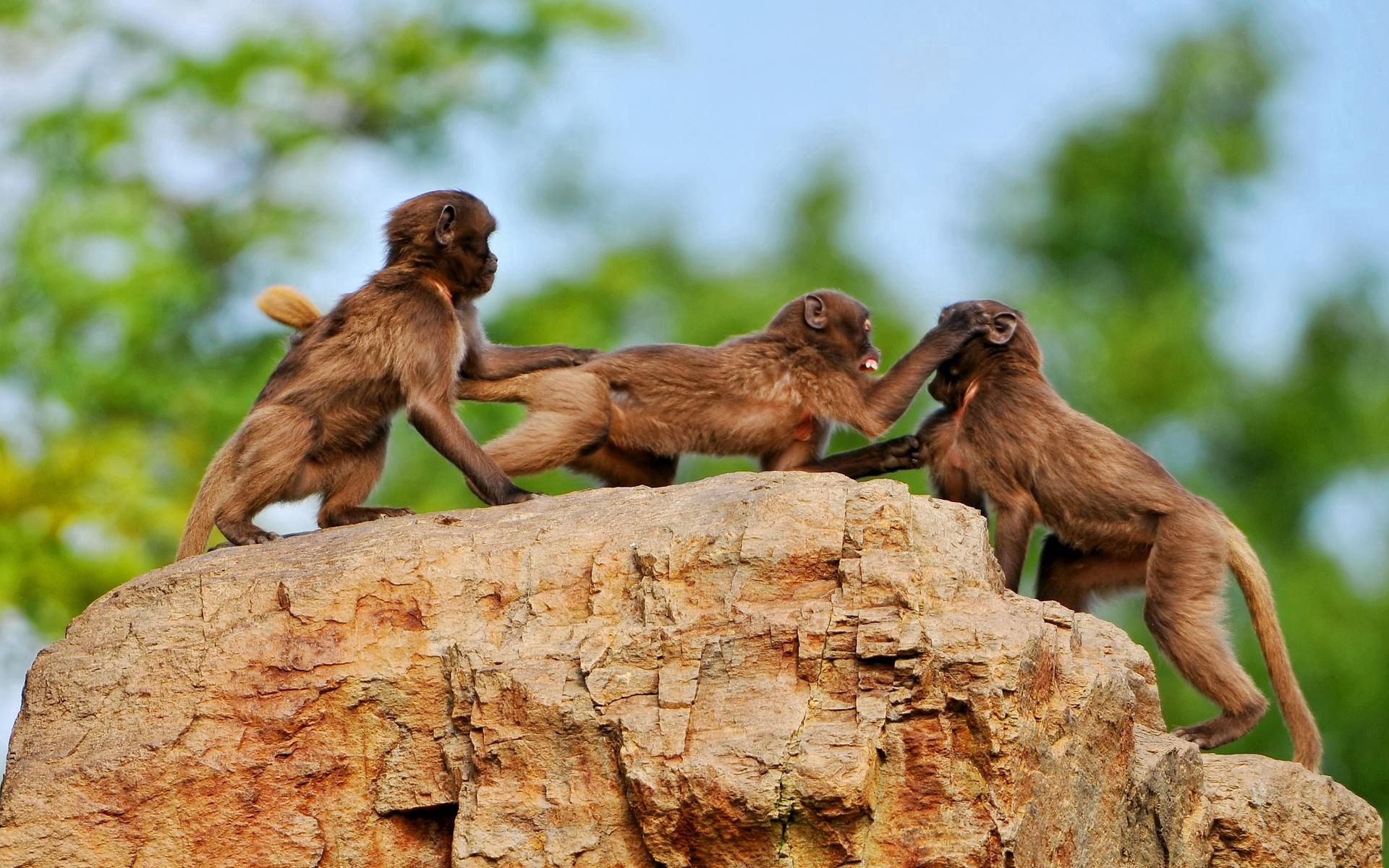112786 Screensavers and Wallpapers Monkeys for phone. Download Animals, Monkeys, Rock, Stone, Family, Playful pictures for free