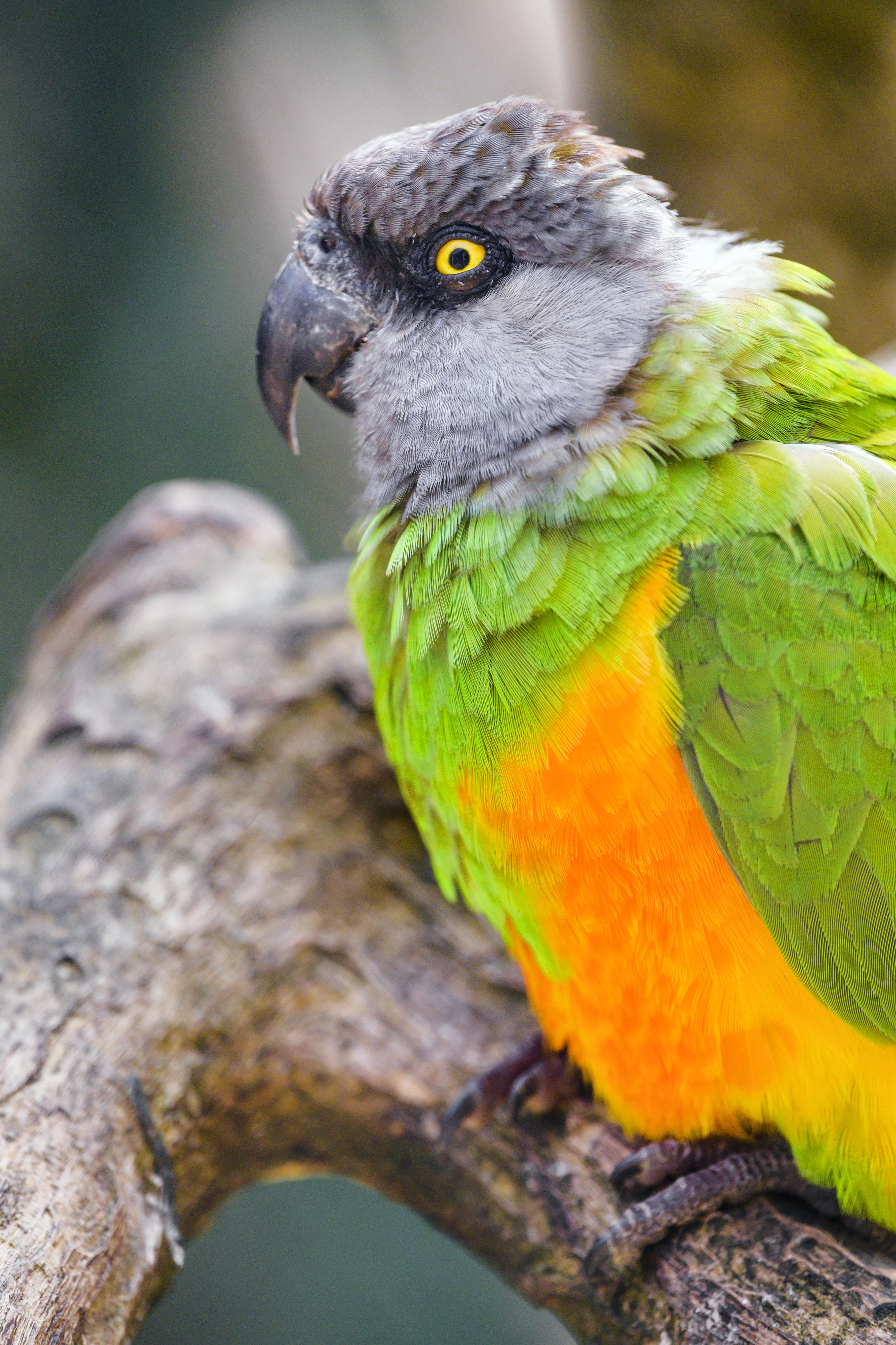 110257 fondo de pantalla 1920x1080 en tu teléfono gratis, descarga imágenes Animales, Loros, Pájaro, Sucursales, Ramas 1920x1080 en tu móvil