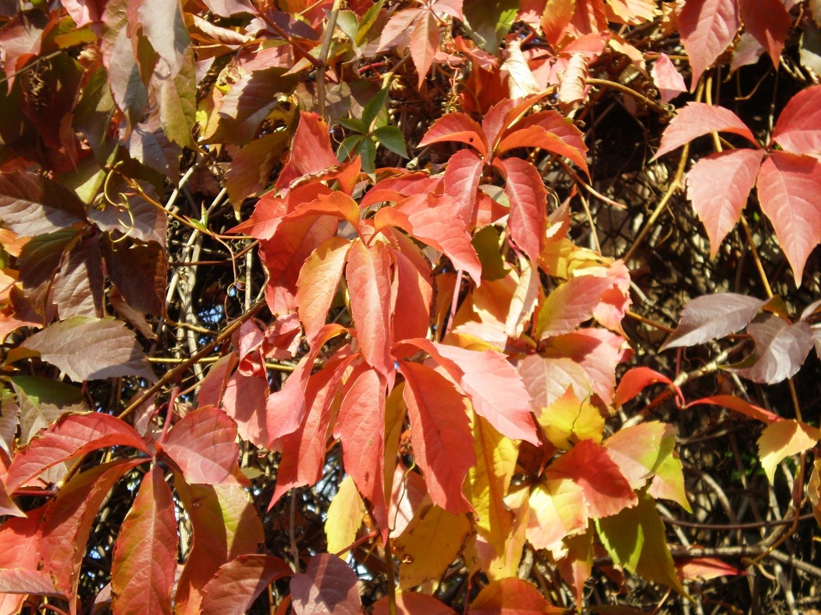 Скачать картинку Фон, Листья, Растения в телефон бесплатно.