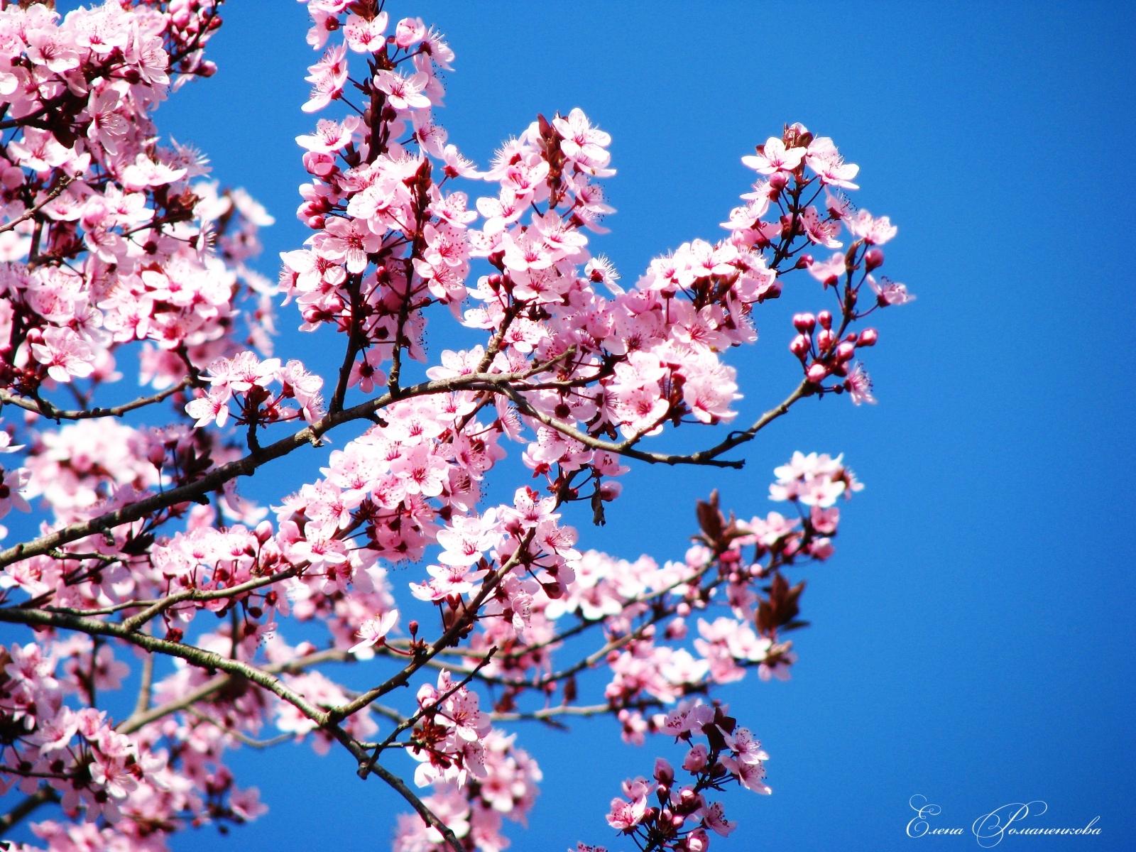 2521 скачать обои Растения, Цветы - заставки и картинки бесплатно