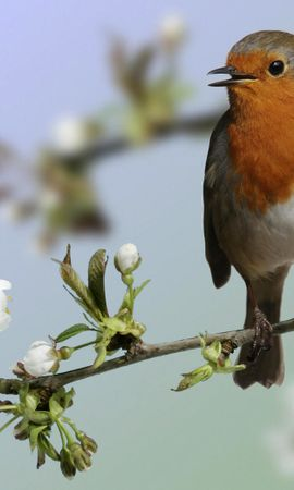 11813 download wallpaper Animals, Birds screensavers and pictures for free