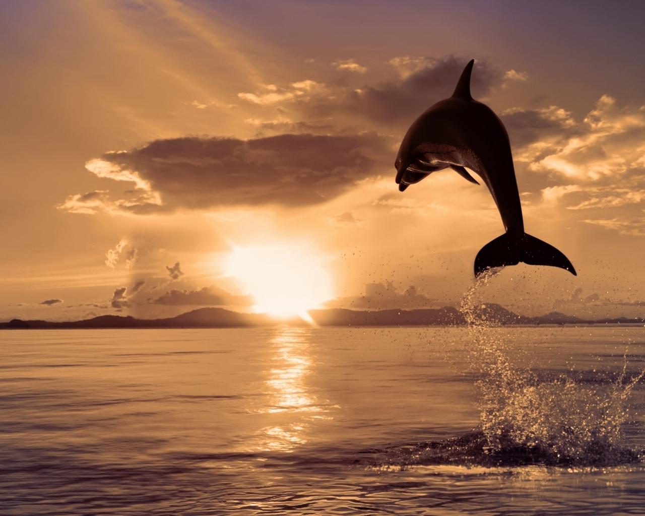 12118 скачать обои Животные, Пейзаж, Вода, Закат, Дельфины, Море, Солнце, Рыбы - заставки и картинки бесплатно
