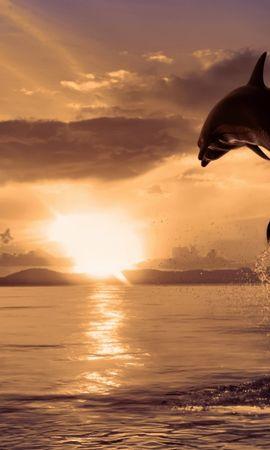 12118 baixar papel de parede Animais, Paisagem, Água, Pôr Do Sol, Golfinhos, Mar, Sol, Peixes - protetores de tela e imagens gratuitamente