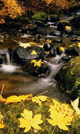 9038 скачать обои Пейзаж, Река, Камни, Листья - заставки и картинки бесплатно