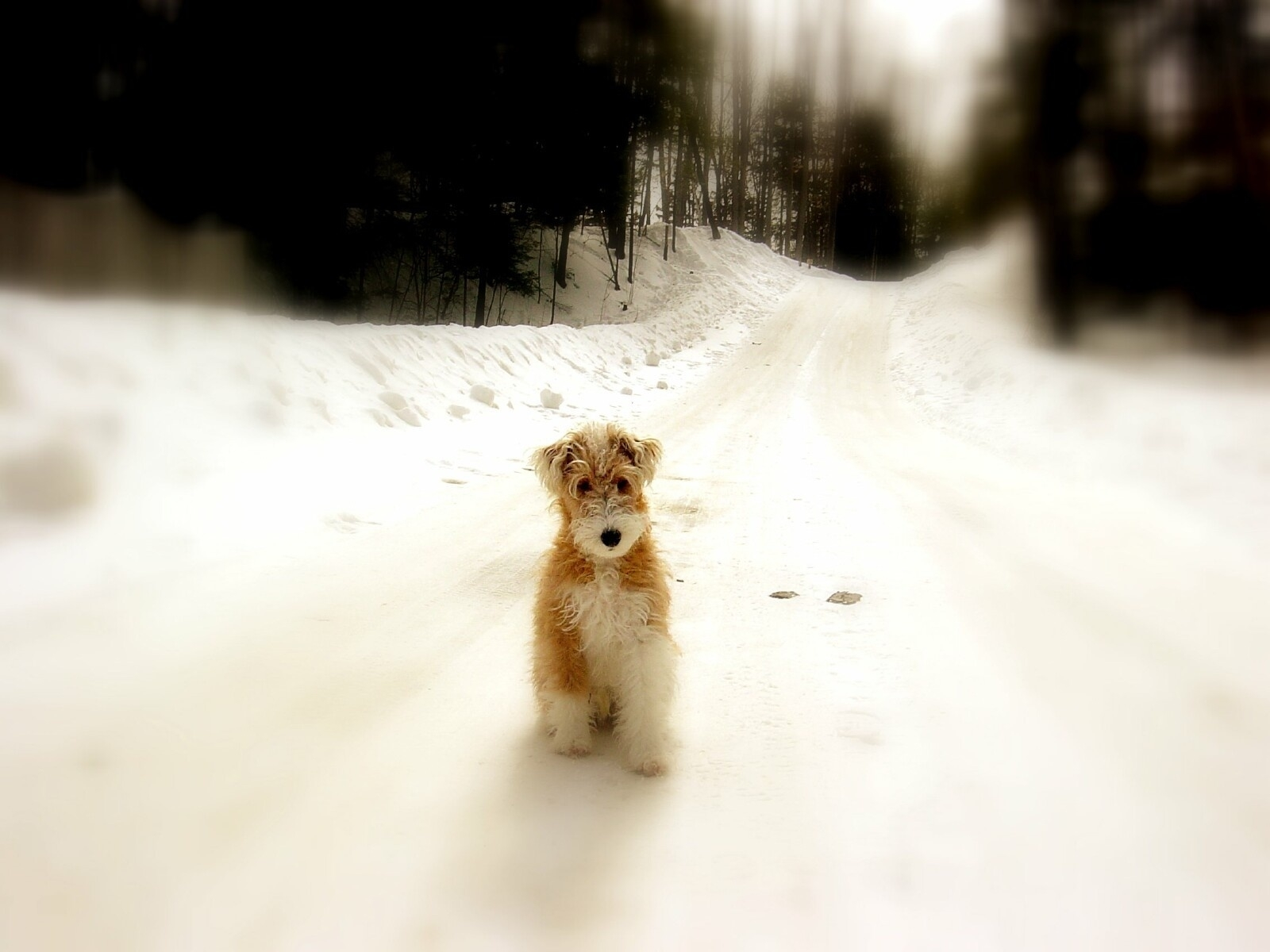 338 download wallpaper Animals, Winter, Dogs, Roads screensavers and pictures for free