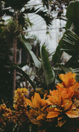 77436 descargar fondo de pantalla Flores, Invernadero, Plantas, Hojas, Vegetación: protectores de pantalla e imágenes gratis