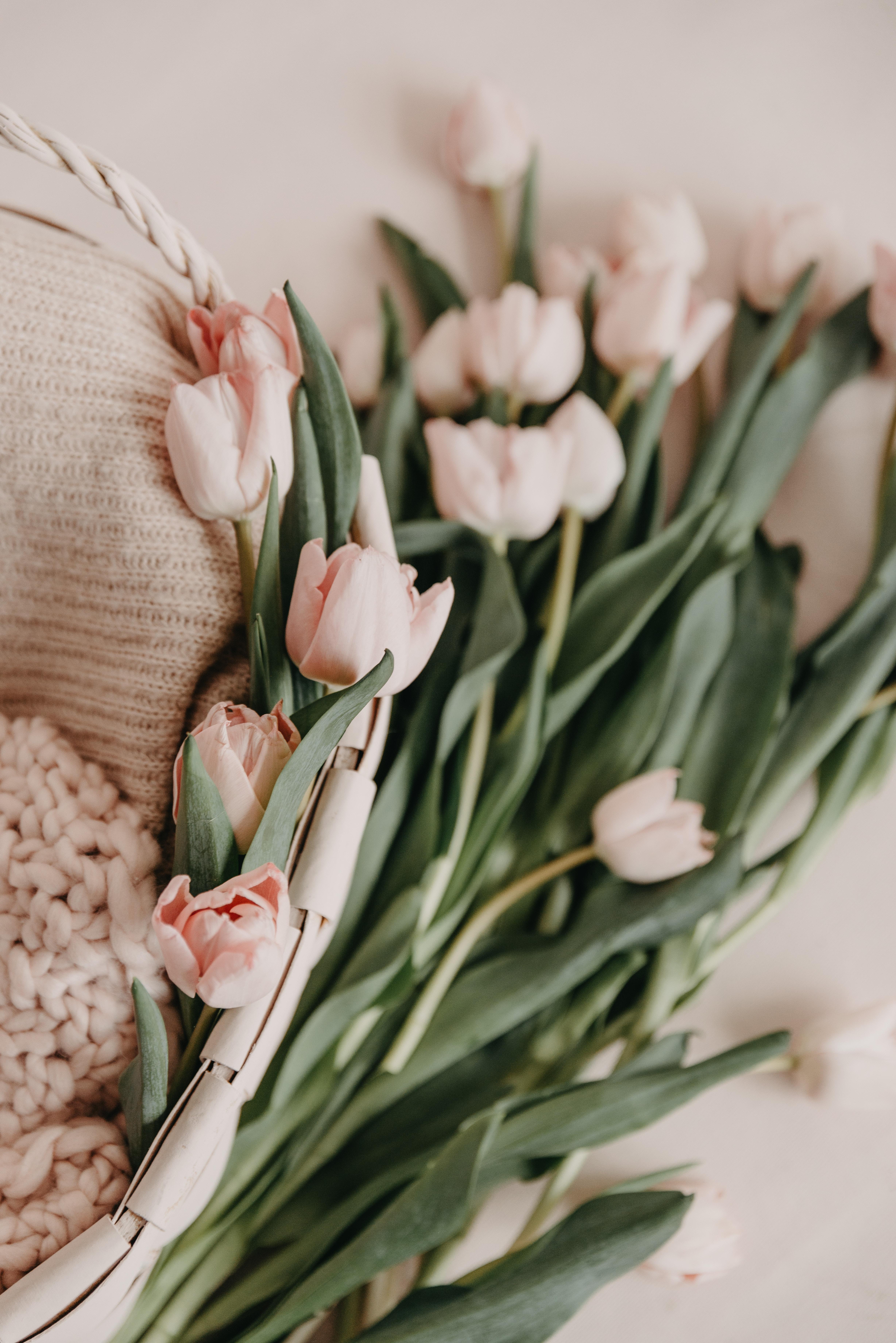 150444 скачать обои Цветы, Букет, Корзинка, Розовые, Весенний, Тюльпаны - заставки и картинки бесплатно