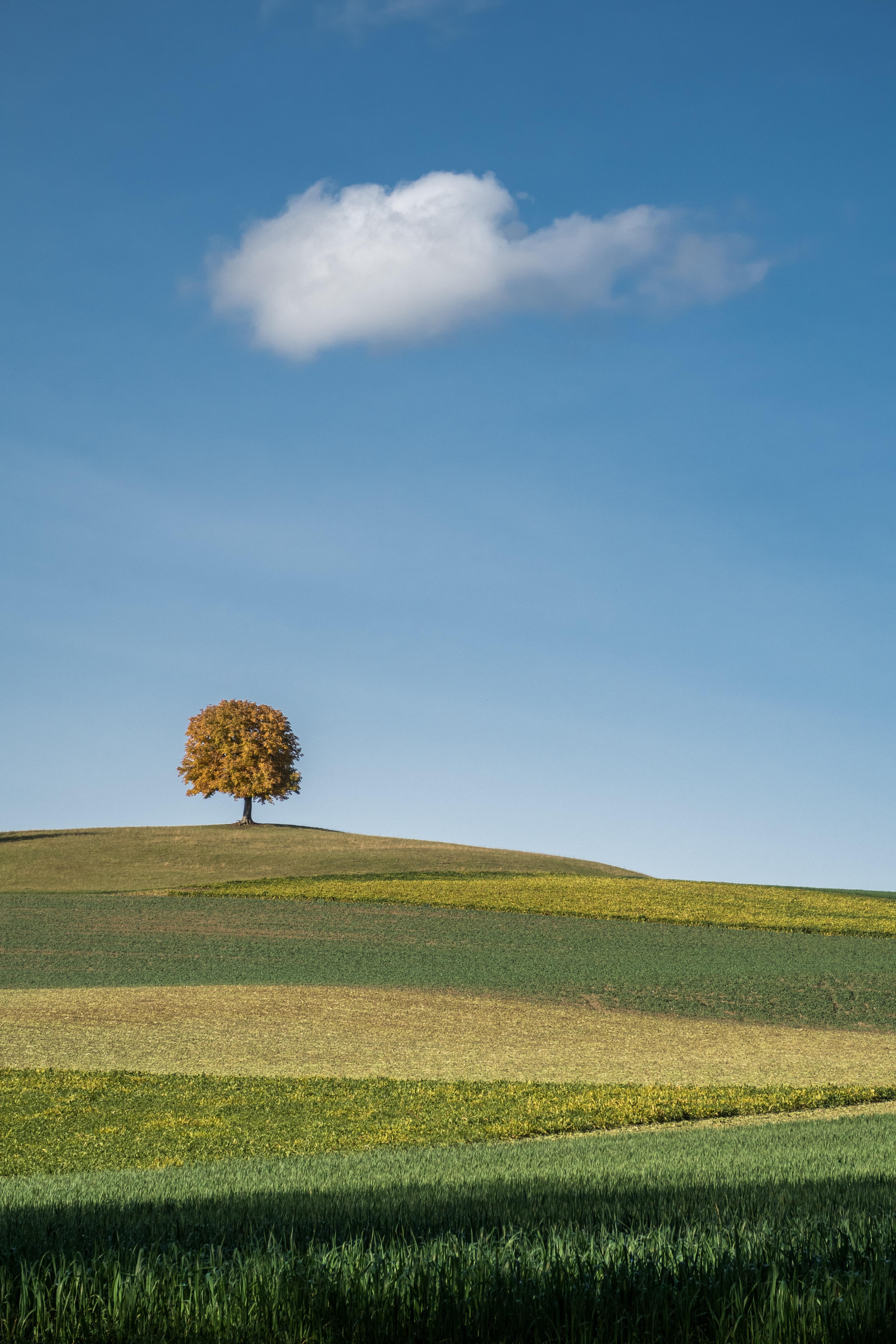 126193 免費下載壁紙 性质, 木头, 场地, 字段, 山丘, 丘陵, 云, 云端, 景观 屏保和圖片