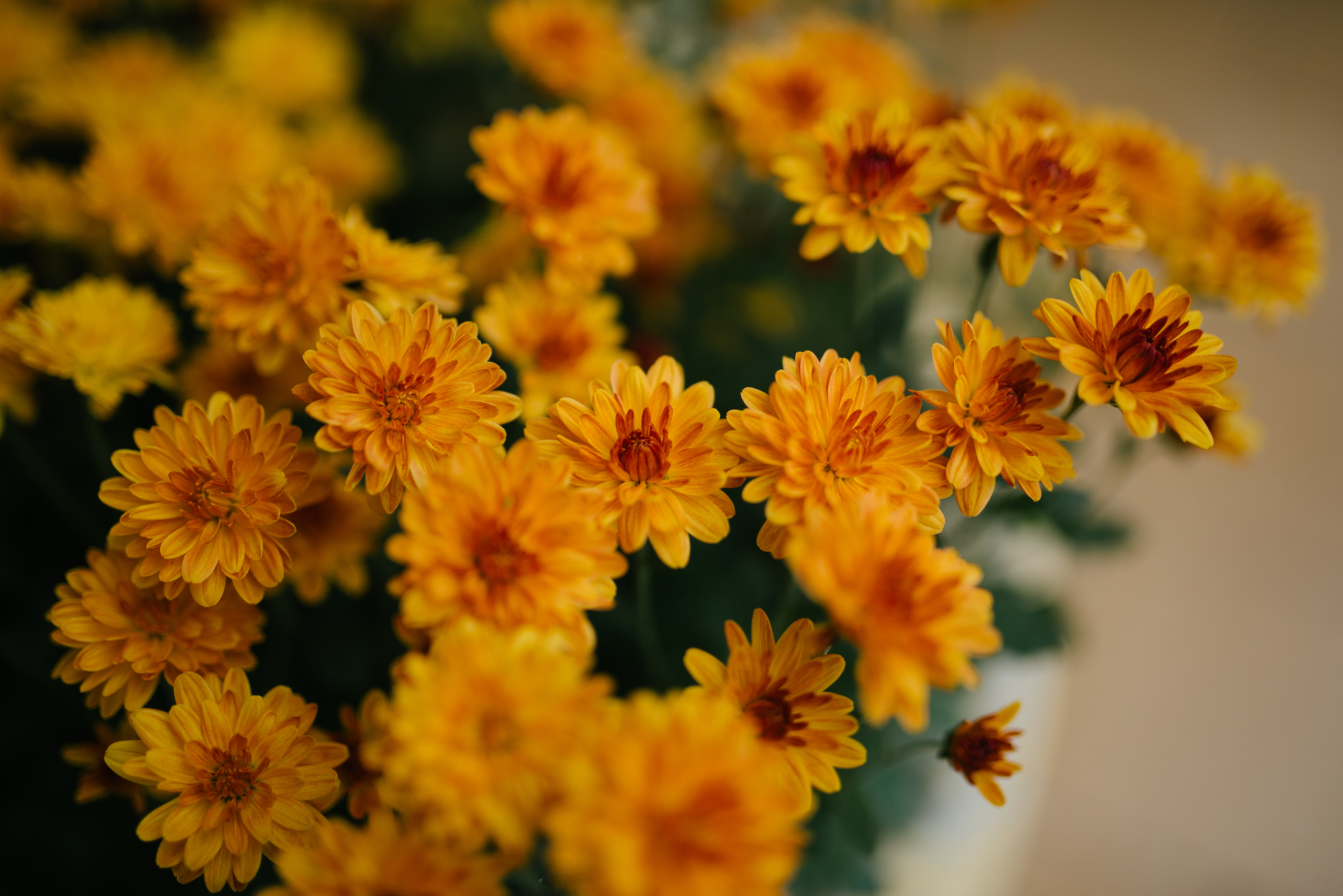 55660 download wallpaper Flowers, Chrysanthemum, Bouquet screensavers and pictures for free