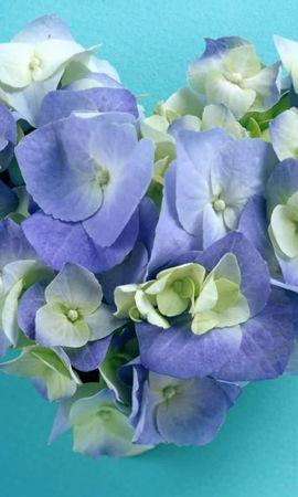 5366 скачать обои Растения, Цветы, Сердца, Любовь, День Святого Валентина (Valentine's Day) - заставки и картинки бесплатно