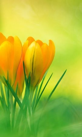 18956 скачать обои Растения, Цветы - заставки и картинки бесплатно
