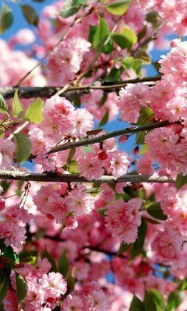 41704 descargar fondo de pantalla Plantas, Flores: protectores de pantalla e imágenes gratis