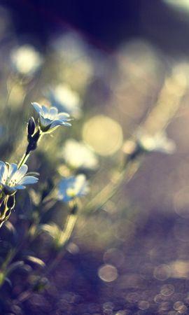 14543 скачать обои Растения, Цветы - заставки и картинки бесплатно