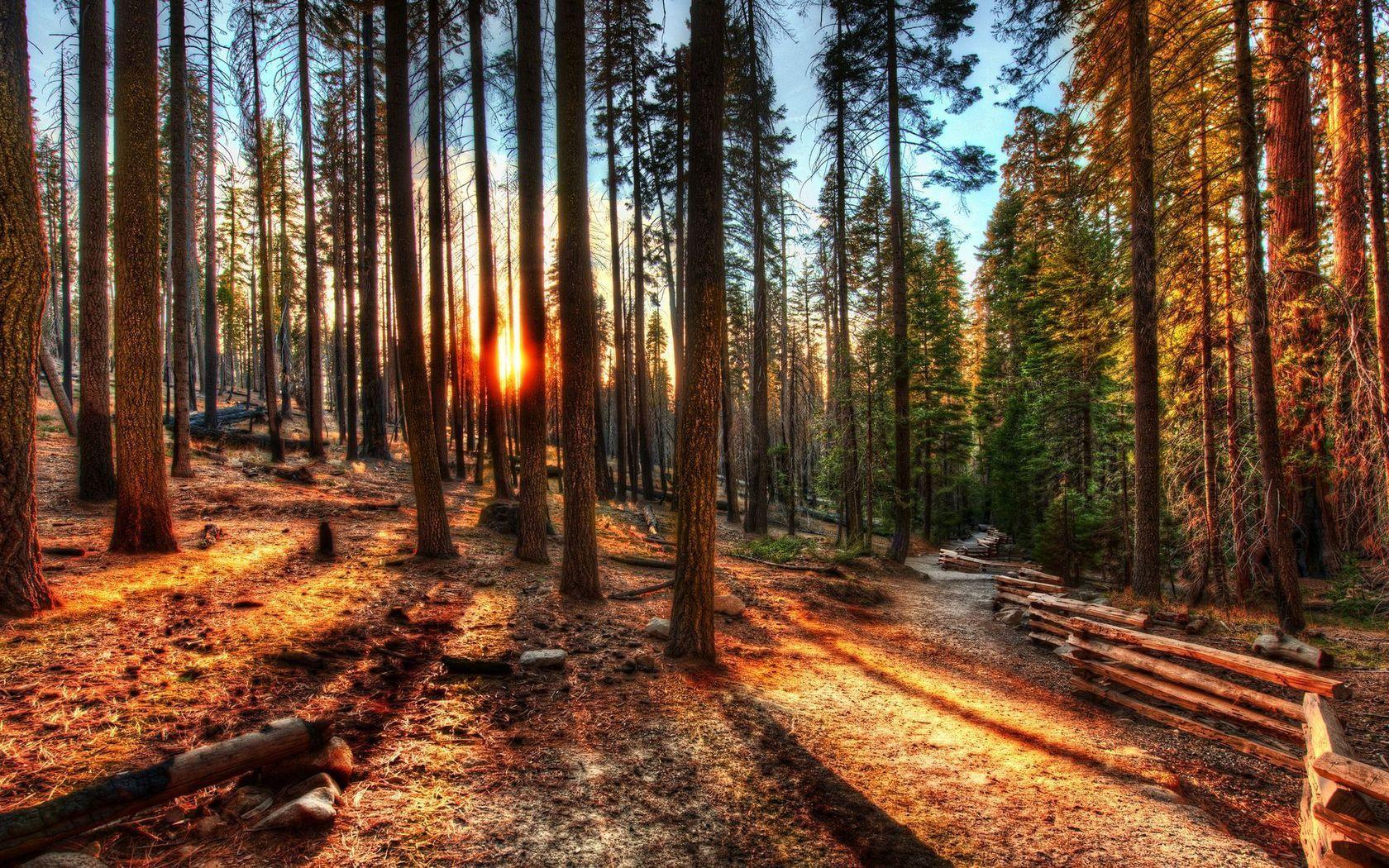 121088 Заставки и Обои Солнце на телефон. Скачать Солнце, Природа, Деревья, Свет, Лес, Забор картинки бесплатно