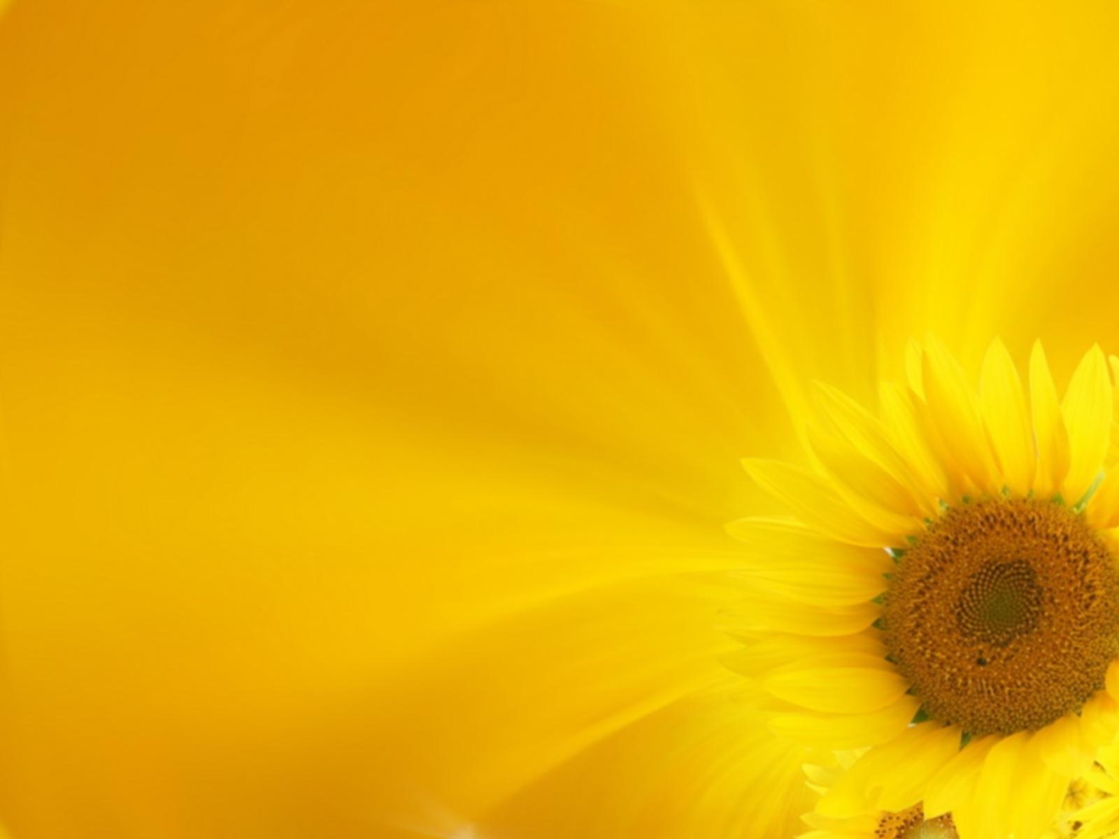 2738 скачать обои Растения, Подсолнухи - заставки и картинки бесплатно