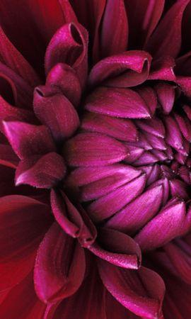 41221 télécharger le fond d'écran Plantes, Fleurs - économiseurs d'écran et images gratuitement