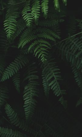146123 descargar fondo de pantalla Oscuro, Helecho, Hojas, Plantas: protectores de pantalla e imágenes gratis