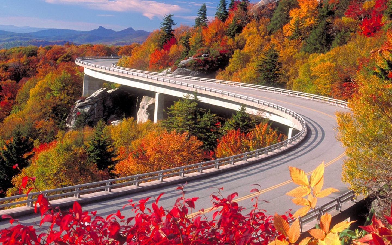 10055 скачать обои Пейзаж, Мосты, Деревья, Дороги, Осень - заставки и картинки бесплатно