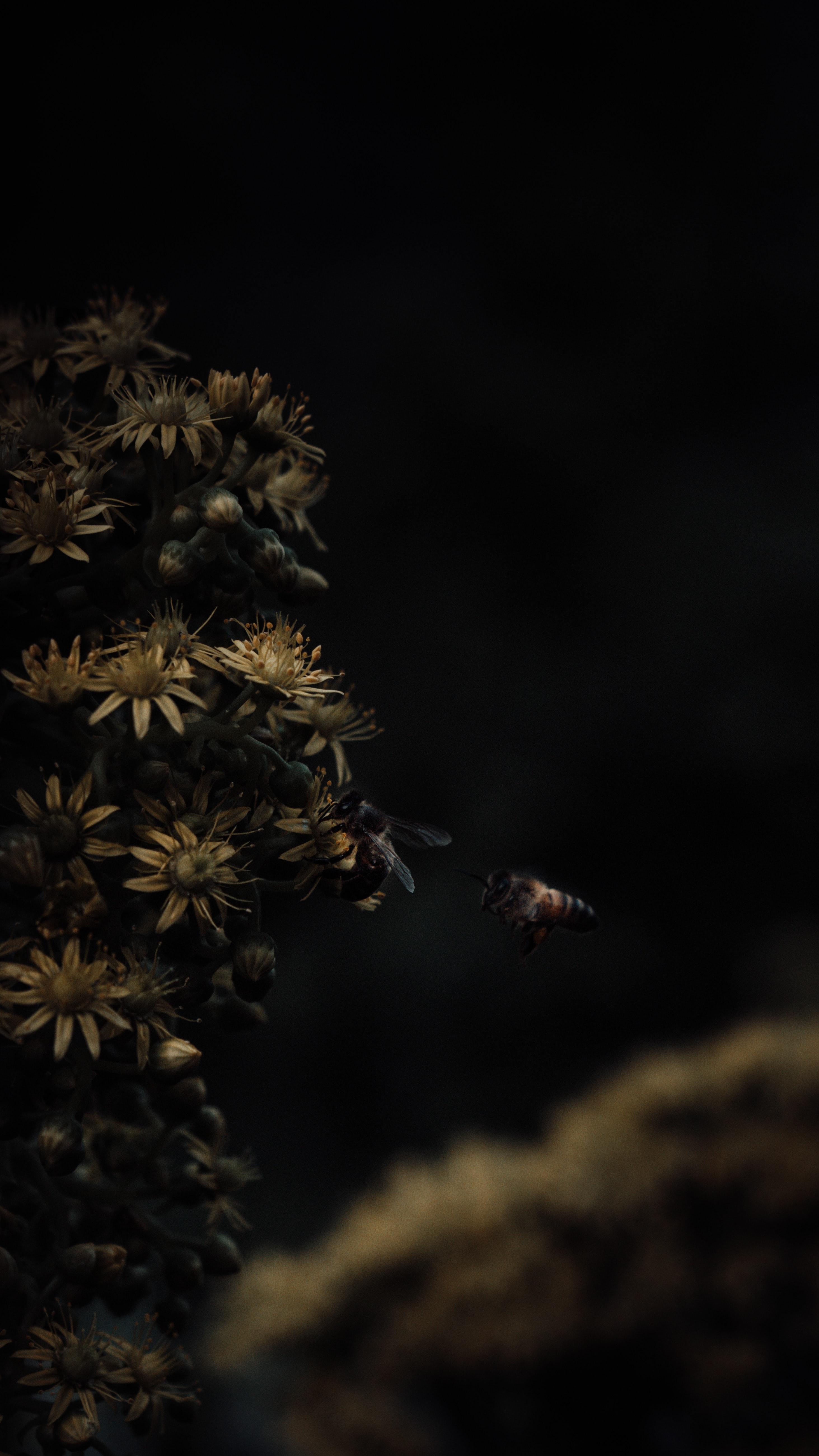 66494 Hintergrundbild herunterladen Blumen, Insekten, Bienen, Makro - Bildschirmschoner und Bilder kostenlos