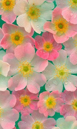 9927 скачать обои Растения, Цветы, Фон - заставки и картинки бесплатно