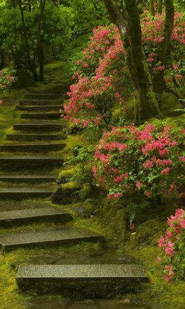 14975 descargar fondo de pantalla Plantas, Paisaje, Flores, Escaleras: protectores de pantalla e imágenes gratis