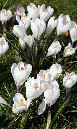 16198 descargar fondo de pantalla Plantas, Flores: protectores de pantalla e imágenes gratis